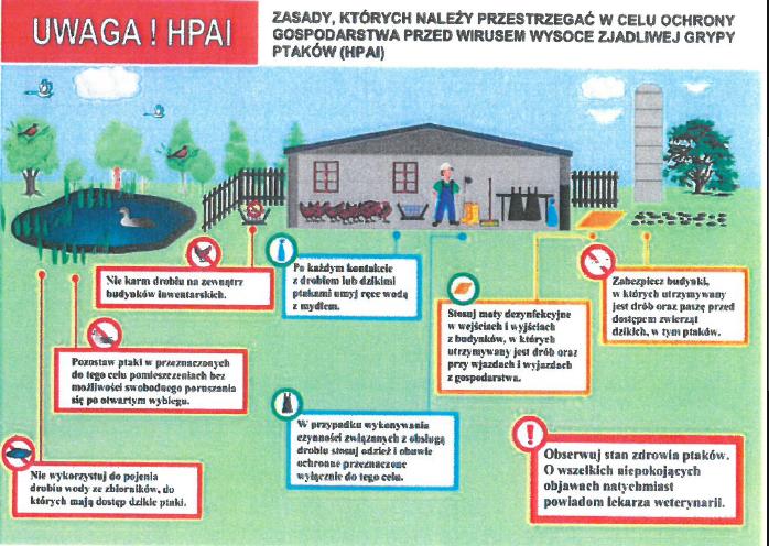 Zasady, których należy przestrzegać w celu ochrony gospodarstwa przed wirusem wysoce zjadliwej grypy ptaków HPAI: NIe wykorzystuj do pojenia drobiu wody ze zbiorników do których majądostęp dzikie ptaki. Pozostaw ptaki w przeznaczonych do tego celu pomieszczeniach bez możliwości swobodnego poruszania się po otwartym wybiegu. NIe karm drobiu na zewnątrz budynków inwentarskich. Po każdym kontakcie z drobiem lub dzikimi ptakami umyj ręce wodąz mydłem. W przypadku wykonywania czynności związanych z obsługądrobiu stosuj odzież i obuwie ochronne przeznaczone wyłącznie do tego celu. Stosuj maty dezynfekcyjne w wejściahch i wyjściach z budynków w których utrzymywany jest drób oraz przy wjazdach i wyjazdach z gospodarstw. Obserwój stan zdrowia ptaków. O wszelkich niepokojących objawach natychmiast powiadom lekarza weterynarii. Zabezpiecz budynki w których utrzymywany jest drób oraz pasza przed dostępem zwierząt dzikich w tym ptaków.