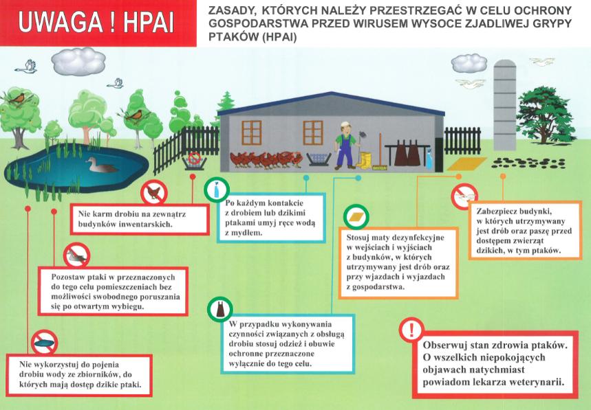 Uwaga! HPAI . Zasady których należy przestrzegać w celu ochrony gospodarstwa przed wirusem wysoce zjadliwej grypy ptaków HPAI. Nie karm drobiu na zewnątrz budynków inwentarskich. Pozostaw ptaki w przeznaczonych do tego celu pomieszczeniach bez możliwości swobodnego poruszania się po otwartym wybiegu. Nie wykorzystuj do pojenia drobiu wody ze zbiorników do których mają dostęp dzikie ptaki. Po każdym kontakcie z drobiem lub dzikimi ptakami umyj ręce wodą z mydłem. W przypadku wykonywania czynności związanych z obsługą drobiu stosuj odzież i obuwie ochronne przeznaczone wyłącznie do tego celu. Stosuj maty dezynfekcyjne w wejściach i wyjściach z budynków, w których utrzymywany jest drób oraz przy wjazdach i wyjazdach z gospodarstwa. Zabezpiecz budynki w których utrzymywany jest drób oraz paszę przed dostępem zwierząt dzikich w tym ptaków. Obserwuj stan zdrowia ptaków. O wszelkich niepokojących objawach natychmiast powiadom lekarza weterynarii.
